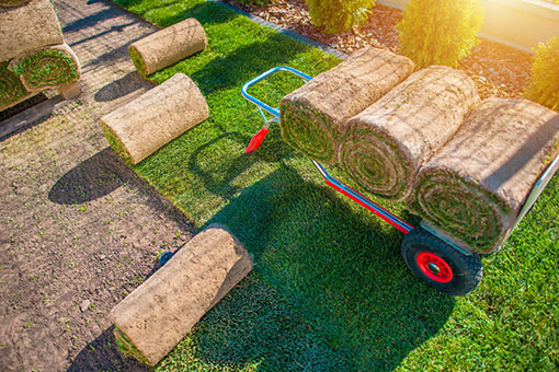 new lawn for homes