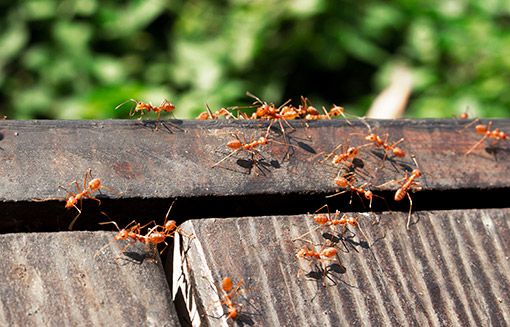 pest-control-services-in-livonia